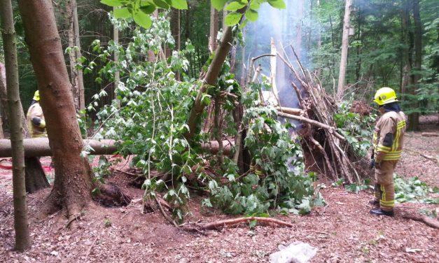 Kleinfeuer im Wald