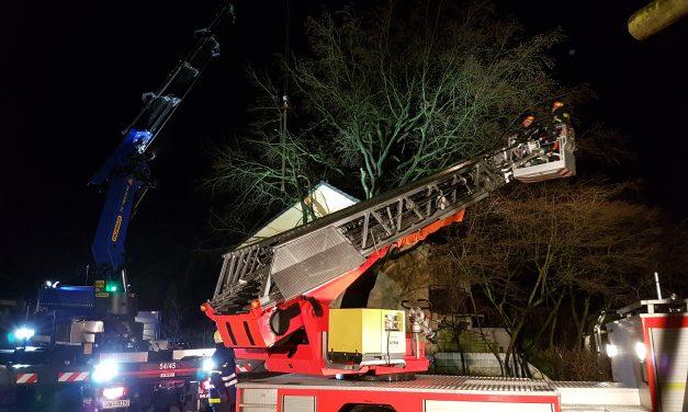 Großer Baum auf Reihenhaus gestürzt