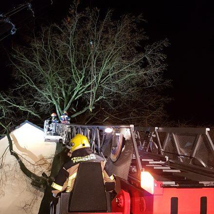 Ein ziemlich großer Baum mit mehr als 1 Meter Stammdurchmesser