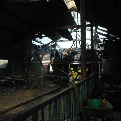 Das direkt angrenzende Stallgebäude mit den Jungbullen konnte im Innenangriff unter Atemschutz gehalten werden, wenn auch Teile des Daches stark beschädigt wurden (Foto: Michael Bunk)