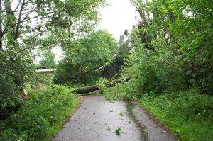 """Die Straße """"Voßhörn"""" war eine der am schlimmsten betroffenen Straßen. Auf einer Länge von ca. 1 Km sind zahlreiche große Bäume, teilweise mit Wurzelteller umgekippt!"""