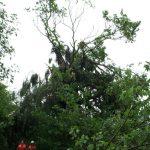 """Die Baumkrone dieser großen Eiche wurde durch den """"kurzen"""" Sturm komplett verwüstet"""