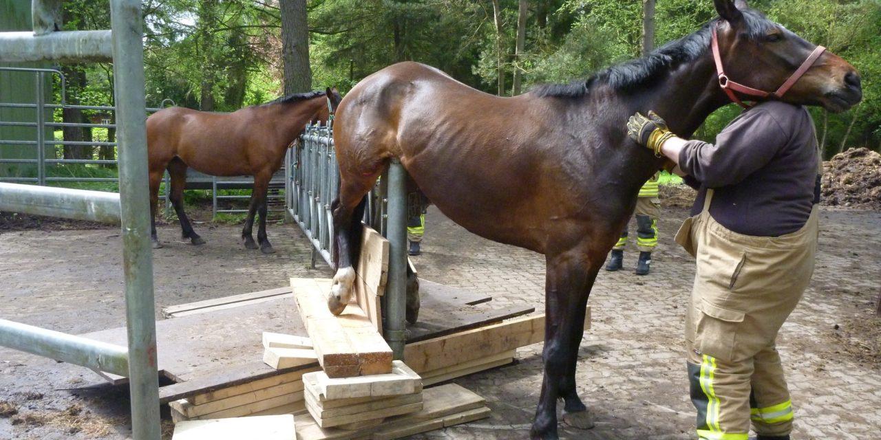 Tierrettung: Pferd hängt auf Gatter fest