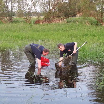 mit Hilfe eines Käschers und einer Kiste wurde sich dem Fisch genähert