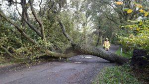 Samt Wurzelwerk komplett umgestürzt war dieser Baum.