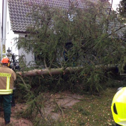Auch dieser Baum wurde beseitigt