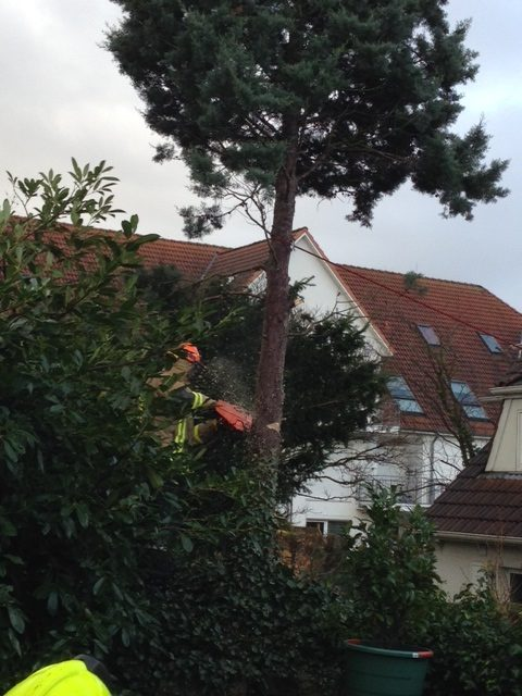 Baum droht auf Haus zu Fallen