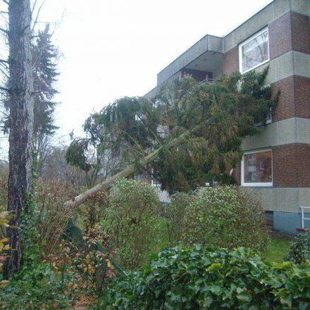 Der Baum lehnte sich am Gebäude an.