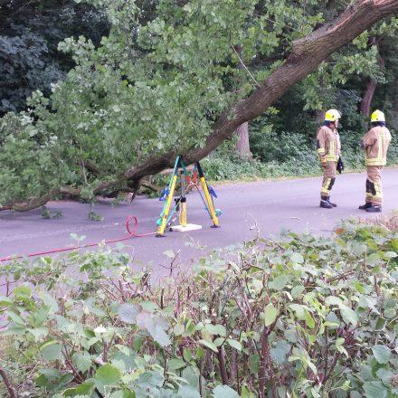 Abgestützer Baum - Auto entfernt