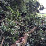 Der Baum blockierte den gesamten Weg