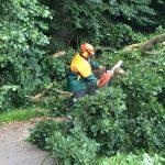 Mit Hilfe der Motorsäge wurde der Baum zerkleinert