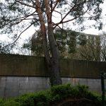 Der Sturm riss diesen Baum samt Wurzelteller aus dem Boden.....