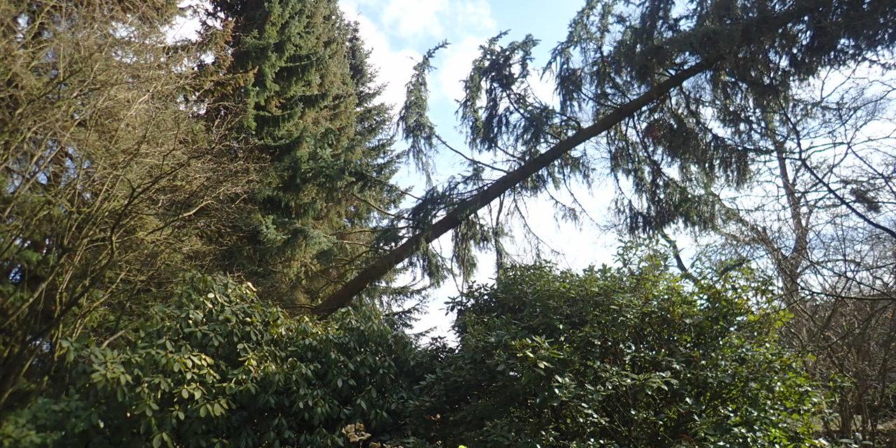 Baum droht zu fallen