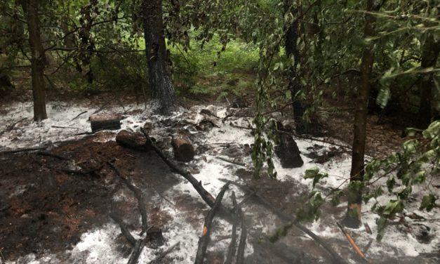 Feuer im Wald