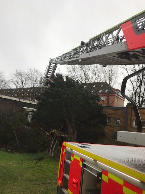 Baum gegen Gebäude gestürzt