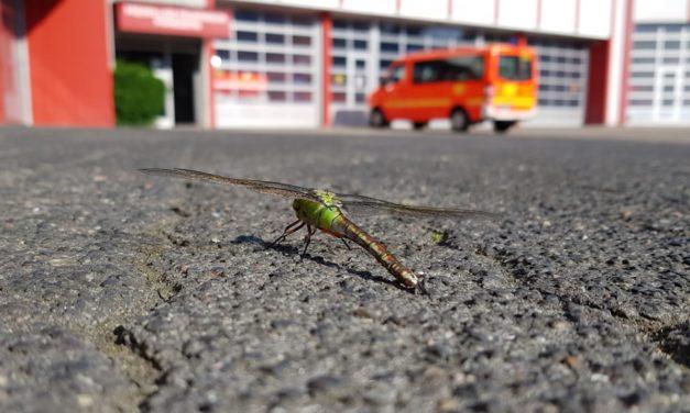 Libelle vor der Hauptfeuerwache notgelandet.