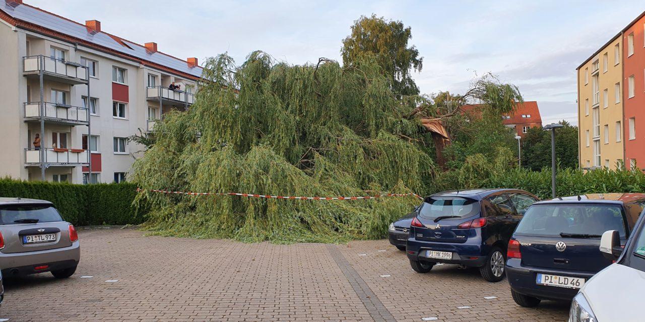 Großer Baum umgestürzt